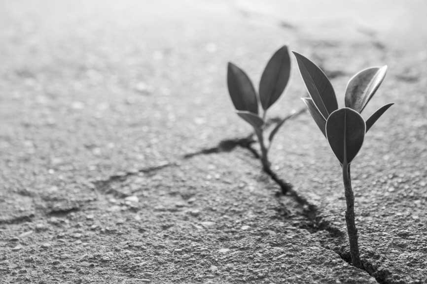 Black and white image of two hearty little plants growing from a crack in the concrete.